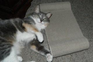 PETPAWJOY #1 PREMIUM CARBOARD CAT SCRATCHING BOARD