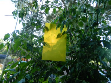 Highly Effective Sticky Trap Paper for Aphid, Whitefly, House Fly, Other Flying Insects