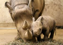Rhino Mommy with Baby
