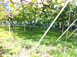 松木果樹園