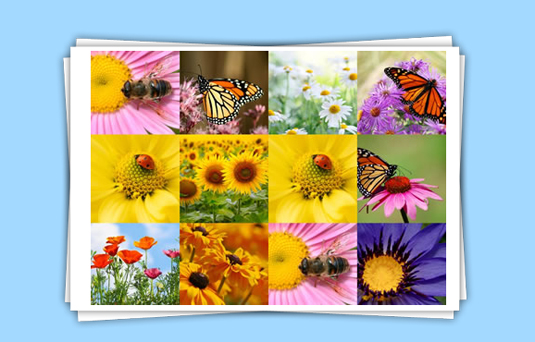 photocollage 10 Best Picture Collage Maker for Easy Photo Editing