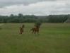 Лошади в национальном парке Кишкуншаг. Стажировка для сотрудников степных ООПТ в Венгрии. 11-17 мая 2014 г.