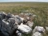 Одно из немногих успешных гнёзд степного орла, восстановившееся на следующий год после пожара. Оренбургская область. Фото И. Карякина