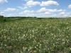 Создание степных памятников природы в Курской области