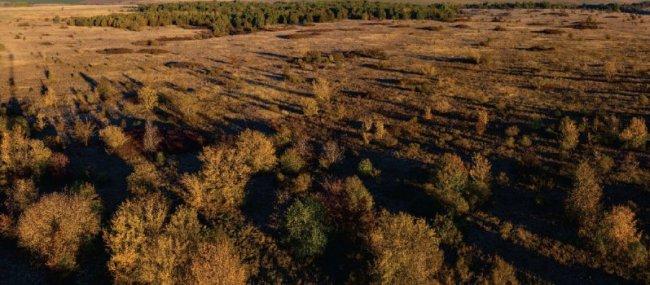 Второй некосимый участок Стрелецкой степи. Фото предоставлено Центрально-Черноземным заповедником