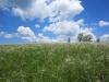 Ландшафты биосферного полигона «Степной» Центрально-Черноземного заповедника. Фото предоставлено Центрально-Черноземным заповедником