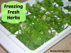 Small Of Can You Freeze Cilantro