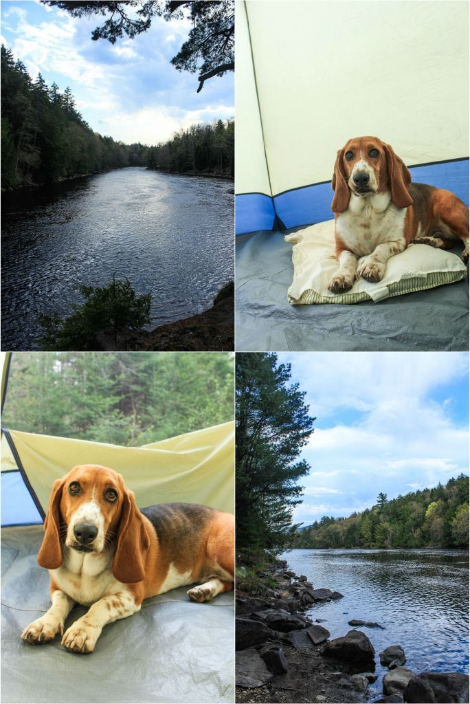 Camping with our basset hound.