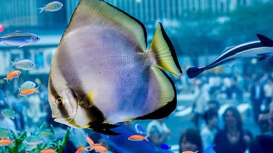美ら海の魚が銀座を泳ぐ Sony Aquarium