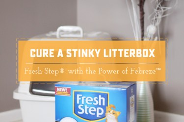 I took some time to review Fresh Step® with the Power of Febreze™ - See the results! | Saynotsweetanne.com