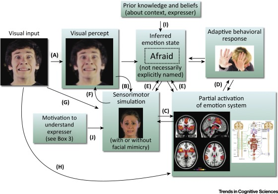facial emotion recognition systems Facial expression recognition has been the focus of much research in recent years, thanks to the emergence of intelligence communication systems, data-driven animation and intelligent game.