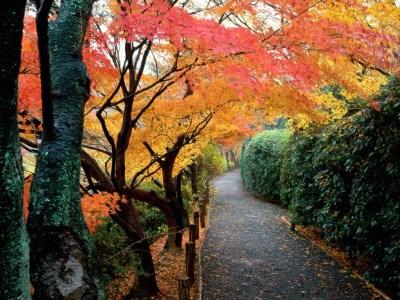 Autumn Cool Wallpapers | Ever Cool Desktop Wallpaper