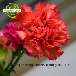 China Red Forever China Red Forever Manufacturers and Suppliers On