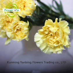 Beauty Forever Flower Beauty Forever Flower Suppliers And