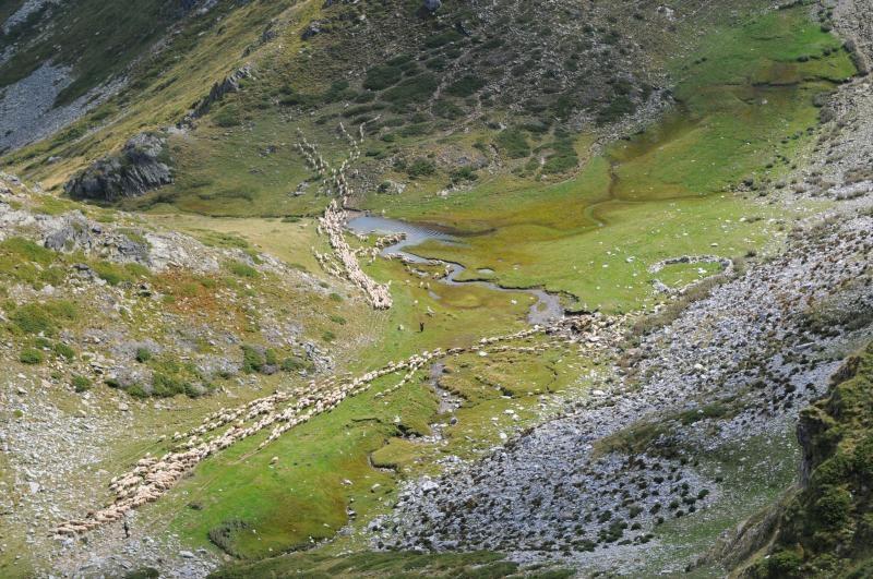 Izvor Kadina s ovcami od Vtáčej jaskyne