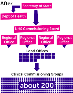 NHS structure - after