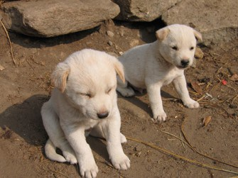 Genetic Study Confirms: First Dogs Came from East Asia