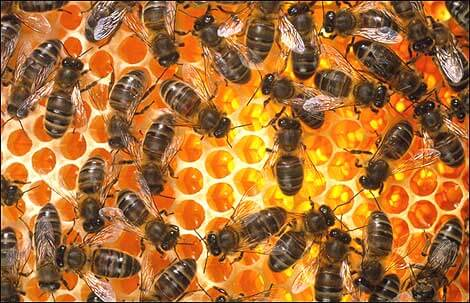 Beehive extract shows potential as prostate cancer treatment