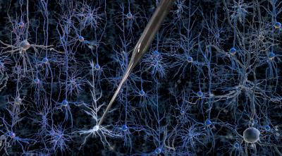 Robot reveals the inner workings of brain cells