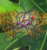 Team models photosynthesis and finds room for improvement