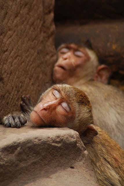 Processing new information during sleep compromises memory