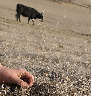 California ranchers anticipate devastating drought impacts