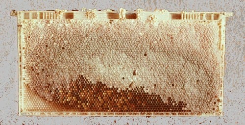 Urban bees using plastic to build hives