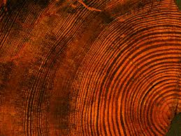 Drought in West? Tree rings reveal nightmares from past