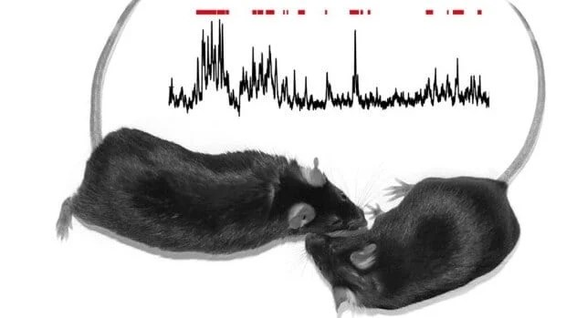 Scientists tie social behavior to activity in specific brain circuit