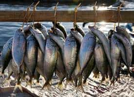Fatty Acids in Fish May Shield Brain from Mercury Damage