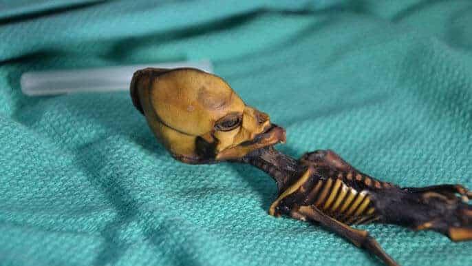 Bizarre Atacama skeleton was a deceased human fetus, says study