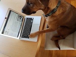 Im Internet weiß niemand, ob Du kein Hund bist... (Quelle: Wikimedia Commons, LiAnna Davis, CC BY-SA 4.0)