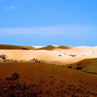 Desertification Effects, Causes, And Examples : Top 10 List