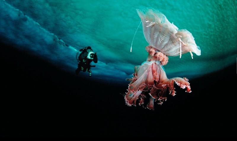 Irukandji Jellyfish Habitat amp Facts  Studycom