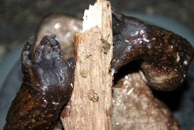 Horror Otton frog claws bones