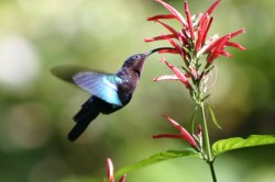 Small Of Where Do Hummingbirds Sleep