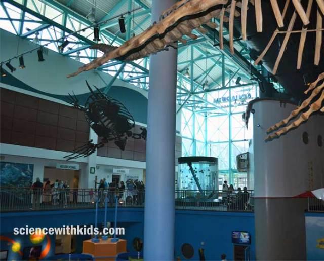 Aquarium Of The Smokies Ripley 39 S Aquarium Of The Smokies