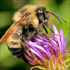 "Thought of the day…""A bee in my bonnet!"""