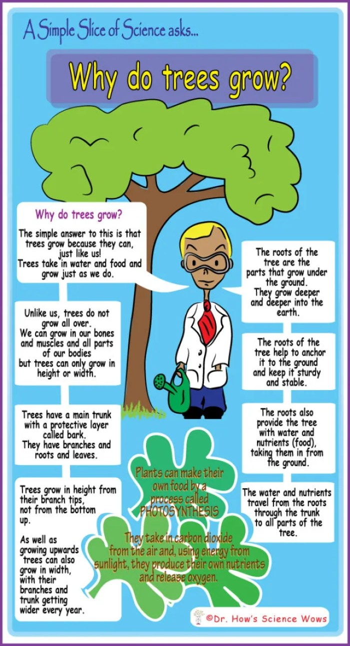 Why Do Trees Grow?