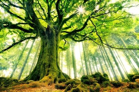 Dieta wege w odniesieniu do rozwoju duchowego - George Kavassilas