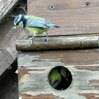 Feeding time at the box.