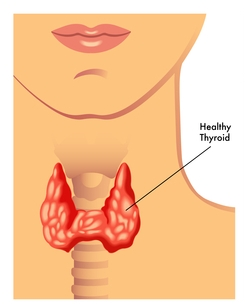 An Underactive Thyroid