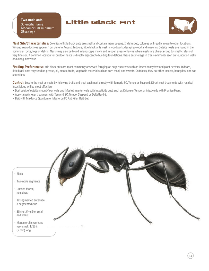 Enamour Trees This Site Contains All Information About Little Black Little Black Ants Little Black Ants Outside Little Black Ants houzz 01 Little Black Ants