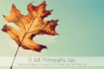 Photography | 10 Tips for Fall Photos