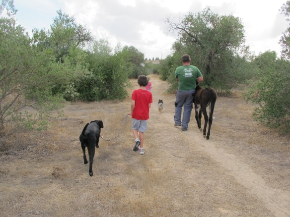 One husband, two children and three animals - two dogs and a donkey.