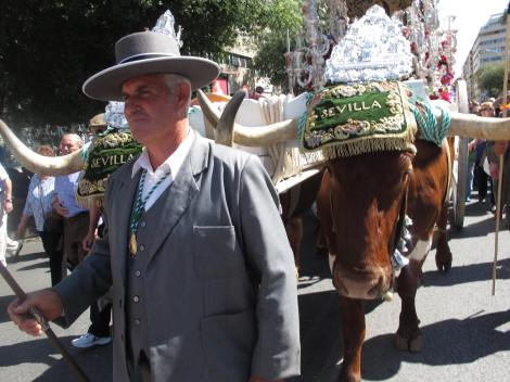 The simpecado, pulled by two oxen, leads the the way.