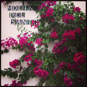 Bright bouganvillea against a white wall: so Andalucian.
