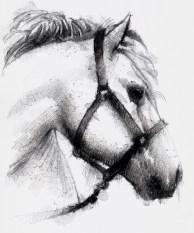 Drey horse
