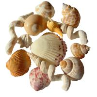 How to Clean Seashells Controversy
