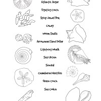 Match the Seashells Printout for Kids